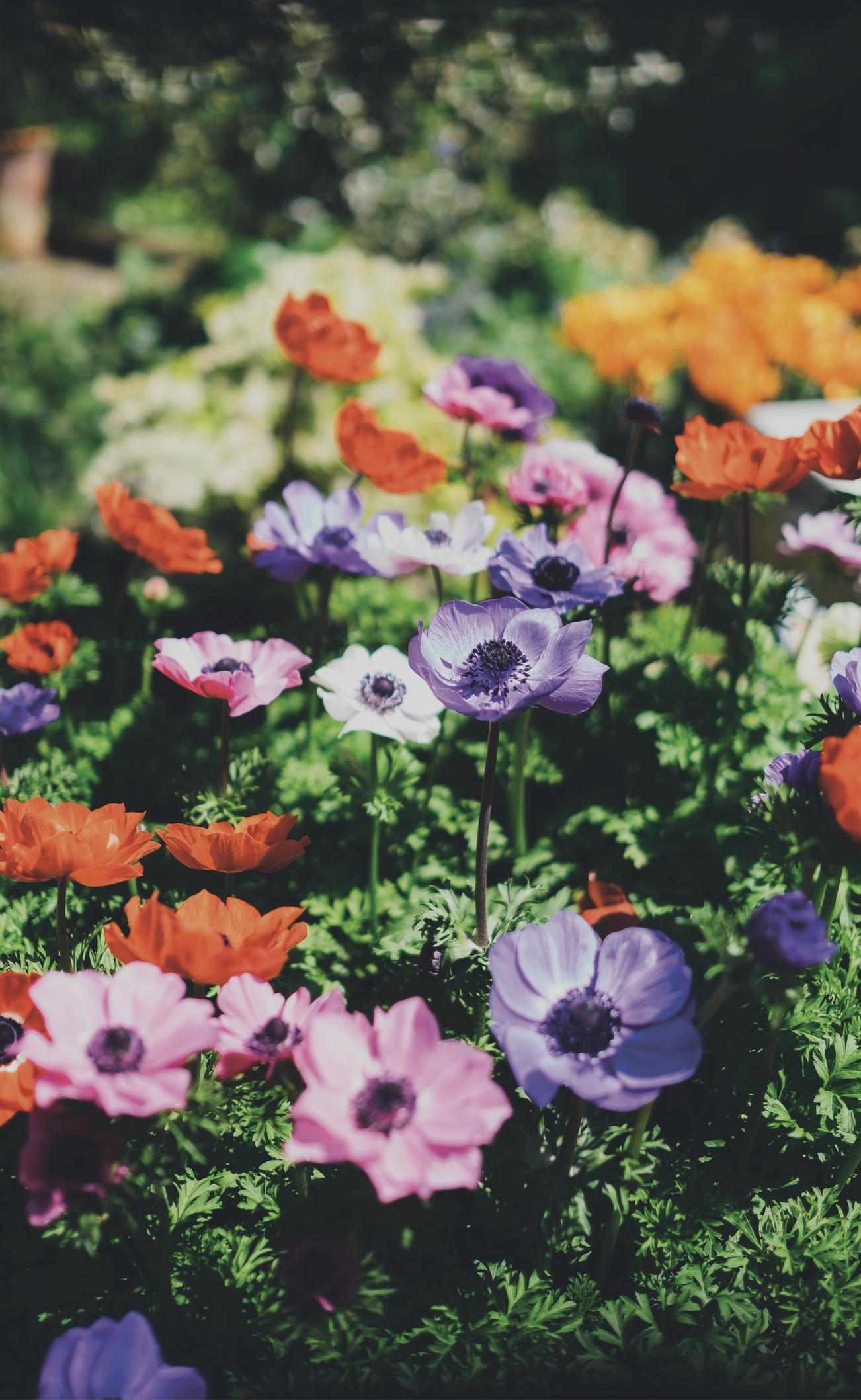 NJ_BLACKWELL_garden_services9